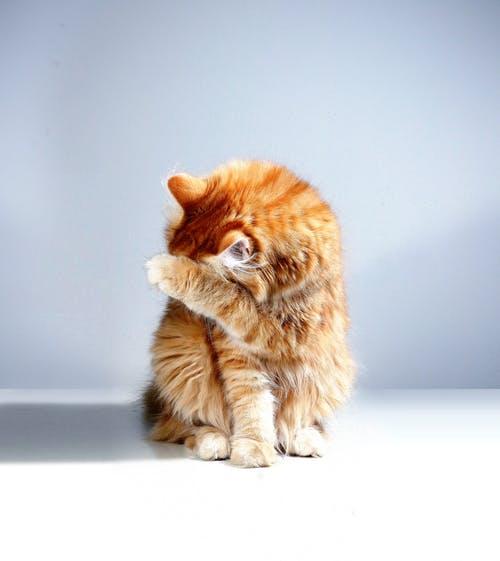 Adopter un chat : les aménagements à faire chez vous