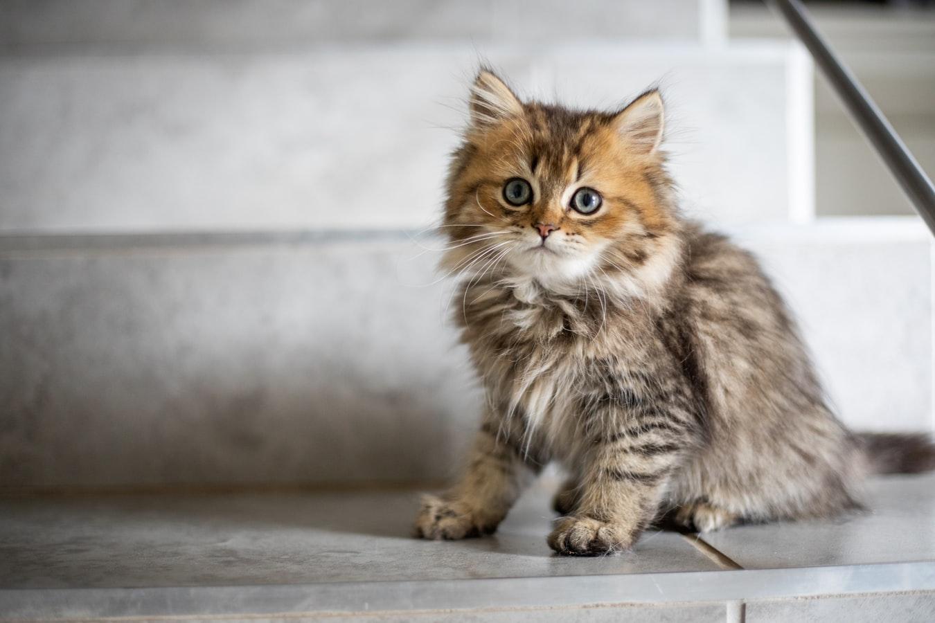 L'importance d'avoir une assurance pour son chat