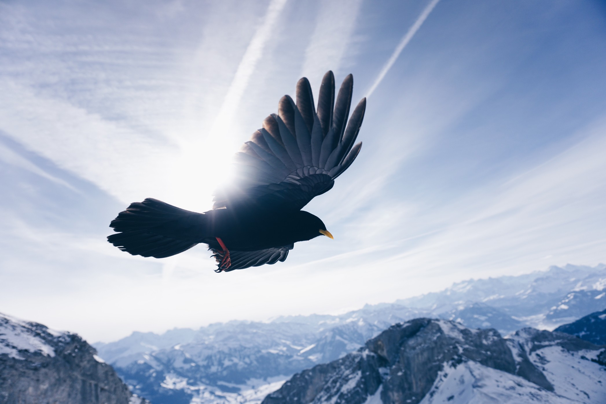 Protéger votre animal de compagnie des maladies véhiculées par les oiseaux