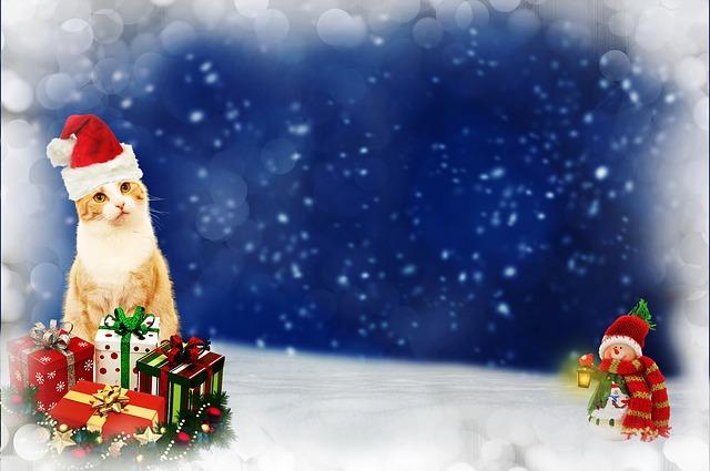 Quel présent offrir pour son animal de compagnie pour les fêtes de fin d'année ?