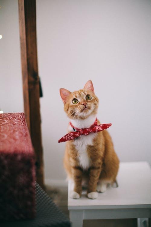 Comment assurer le confort et le bien-être de votre chat après un déménagement ?