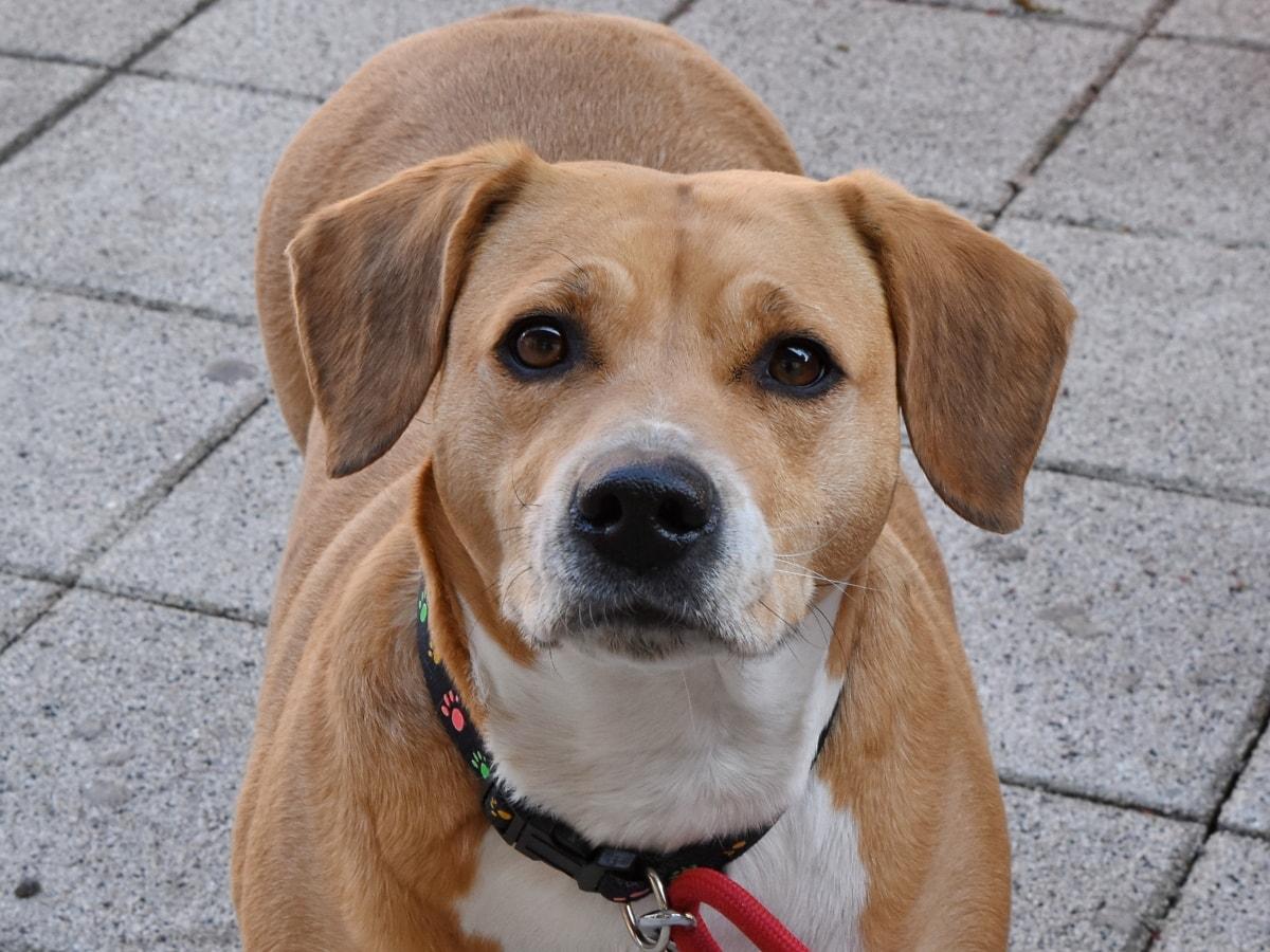 Comment choisir le meilleur harnais pour chien?