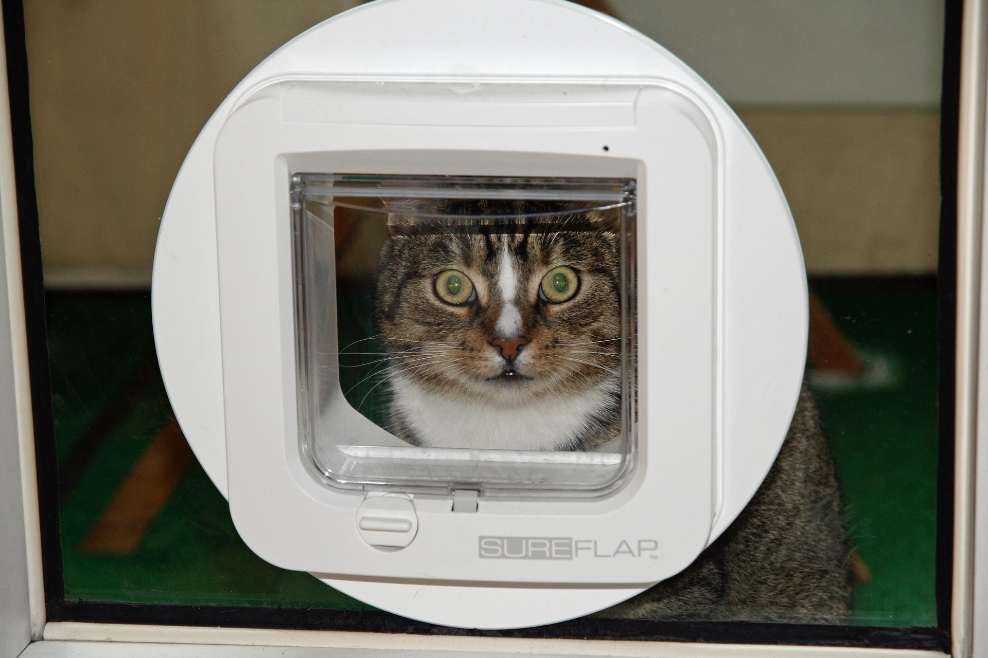 Pourquoi utiliser un médaillon d'identification électronique pour chat ?