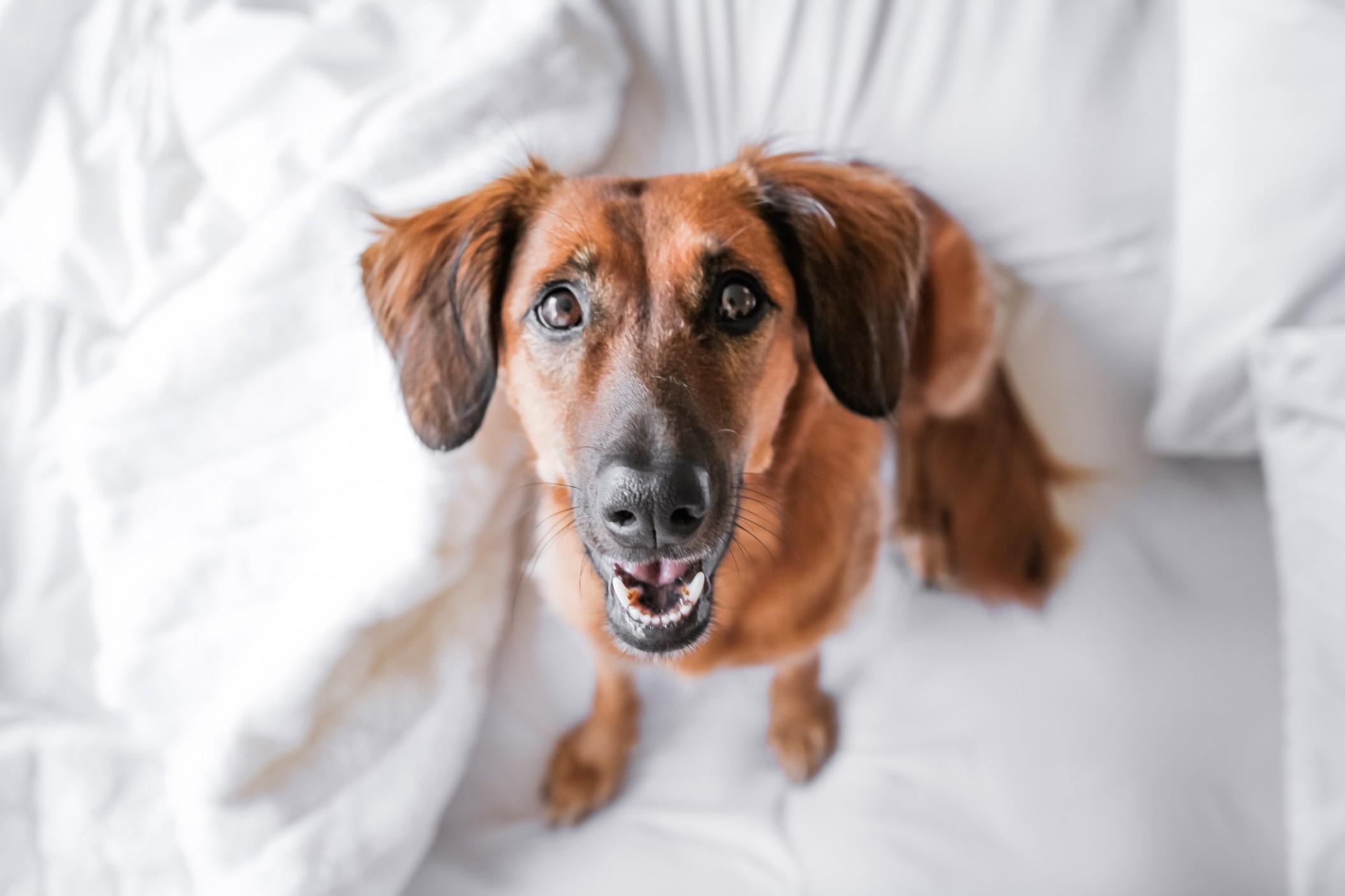 Une nourriture adaptée à votre chien, comment en trouver ?